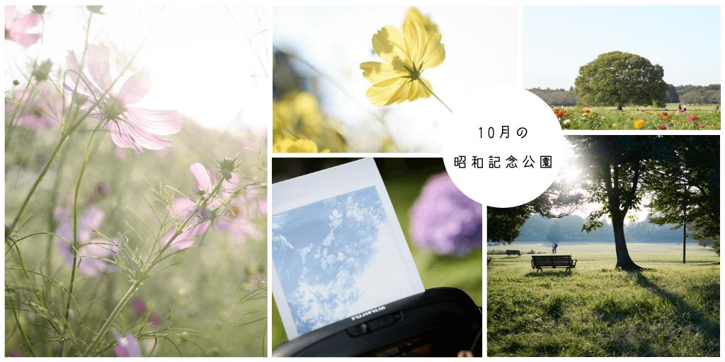 f:id:hachi-log:20201021220621p:plain
