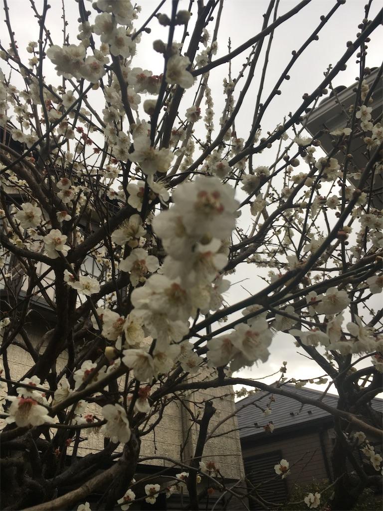 f:id:hachi-nori:20170222155131j:image