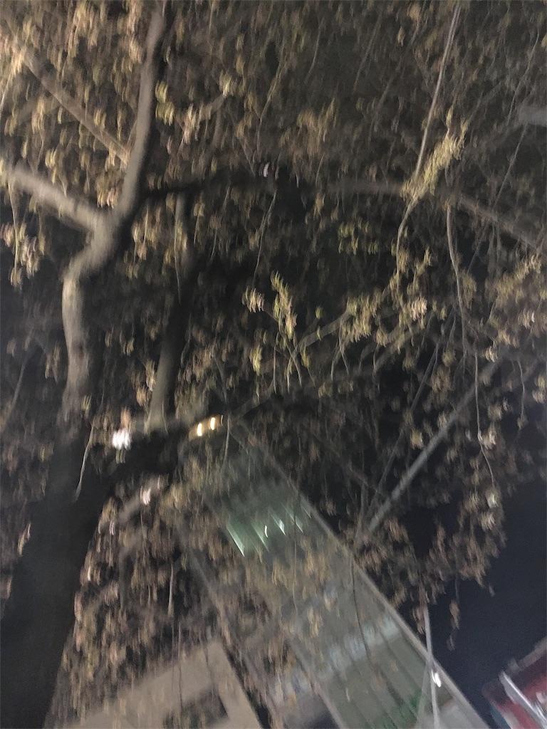f:id:hachi-nori:20170325223311j:image