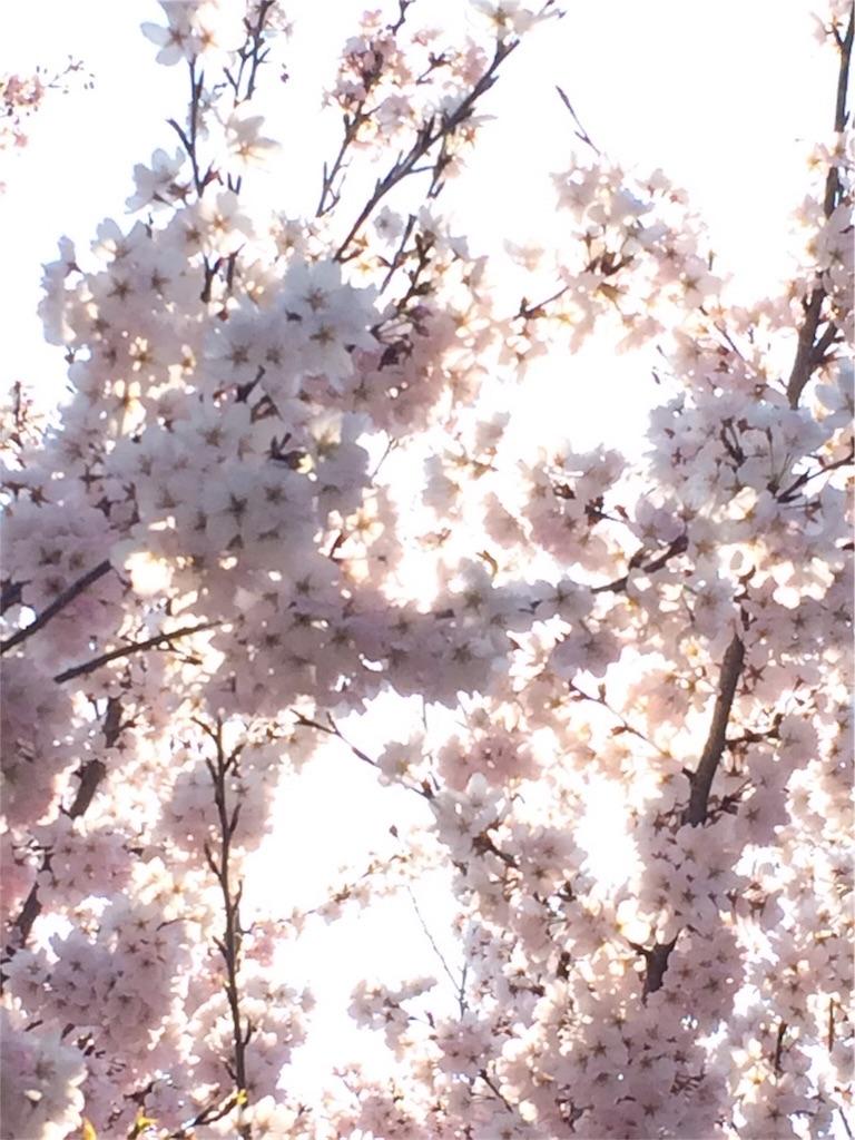 f:id:hachi-nori:20170402210258j:image