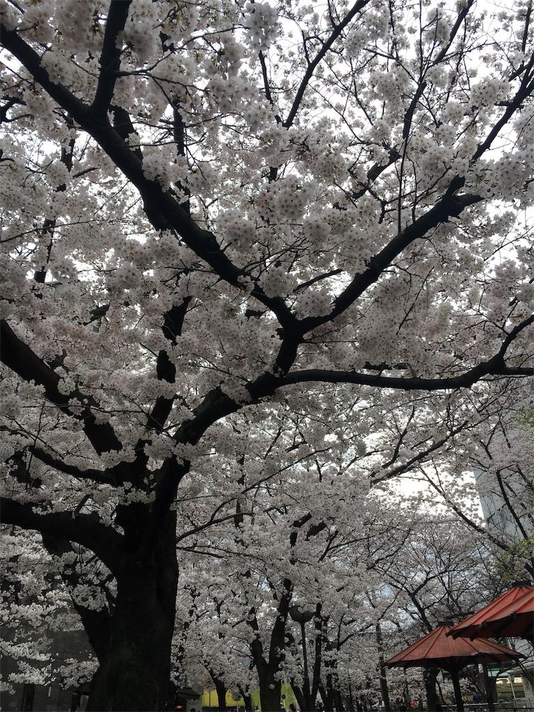 f:id:hachi-nori:20170406194031j:image
