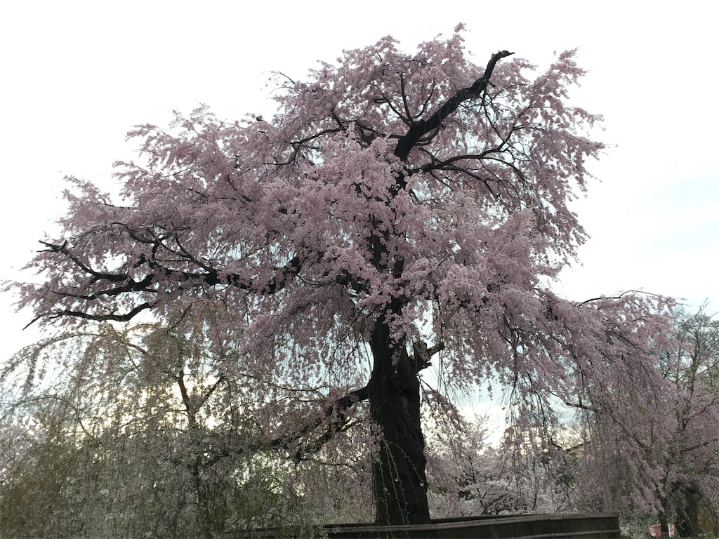 f:id:hachi-nori:20170410222036j:image