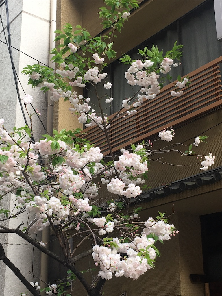 f:id:hachi-nori:20170420190626j:image