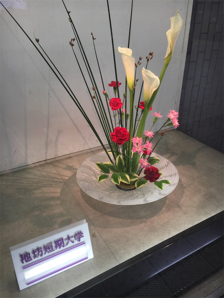 f:id:hachi-nori:20170513212813j:image
