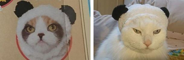 パンダ 猫