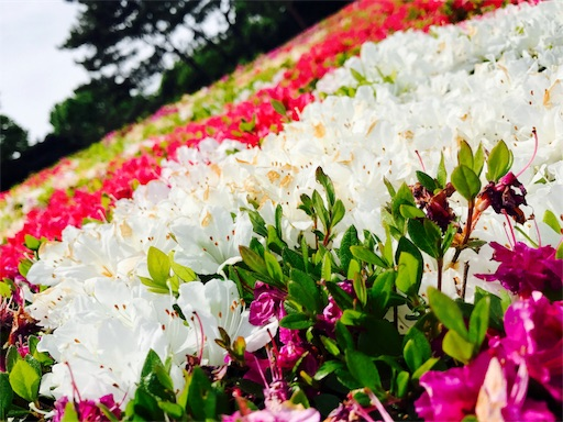 f:id:hachi_and_kuma:20170503193149j:image