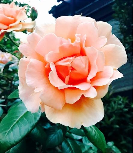 f:id:hachi_and_kuma:20170515211020j:image