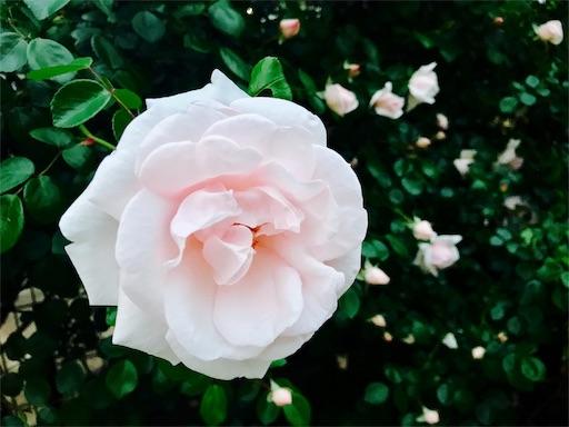 f:id:hachi_and_kuma:20170515211107j:image