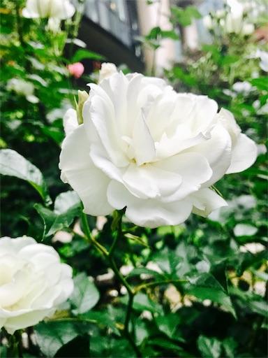 f:id:hachi_and_kuma:20170516181120j:image