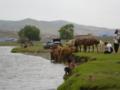 ウランバートルの河原。馬が放牧されちます。