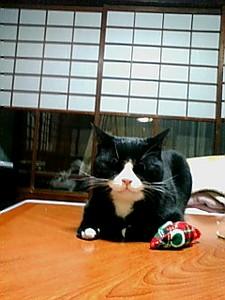 f:id:hachibei-k:20071231230209j:image