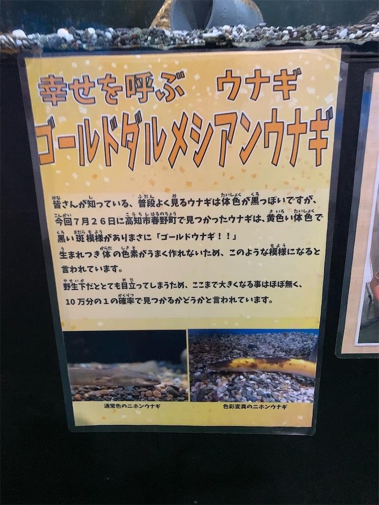 f:id:hachiburo:20200802073535j:image