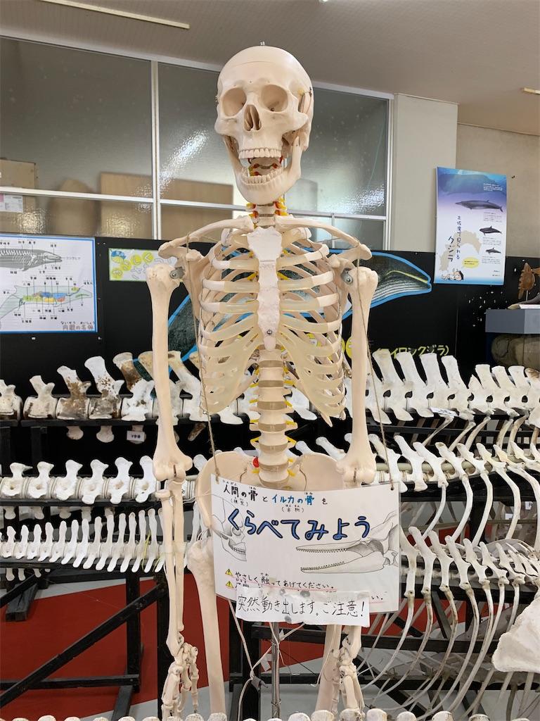 f:id:hachiburo:20200802074129j:image