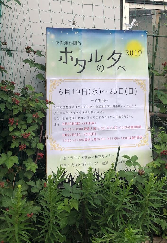 f:id:hachico-tokyo:20190621075124j:image