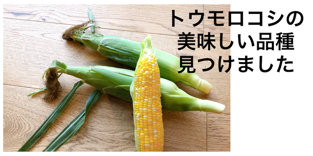 f:id:hachico-tokyo:20190702121905p:image