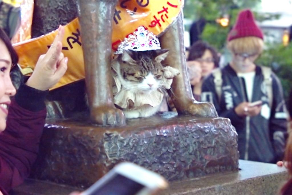 Hachiko-cat-Halloween