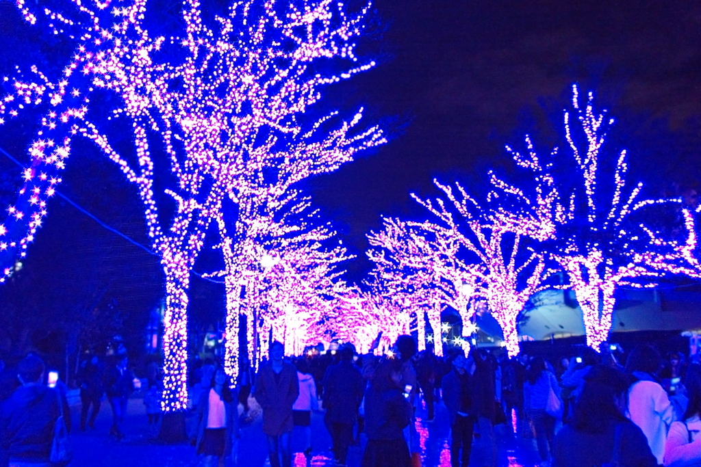 f:id:hachiko-shibuya:20161210183944j:plain