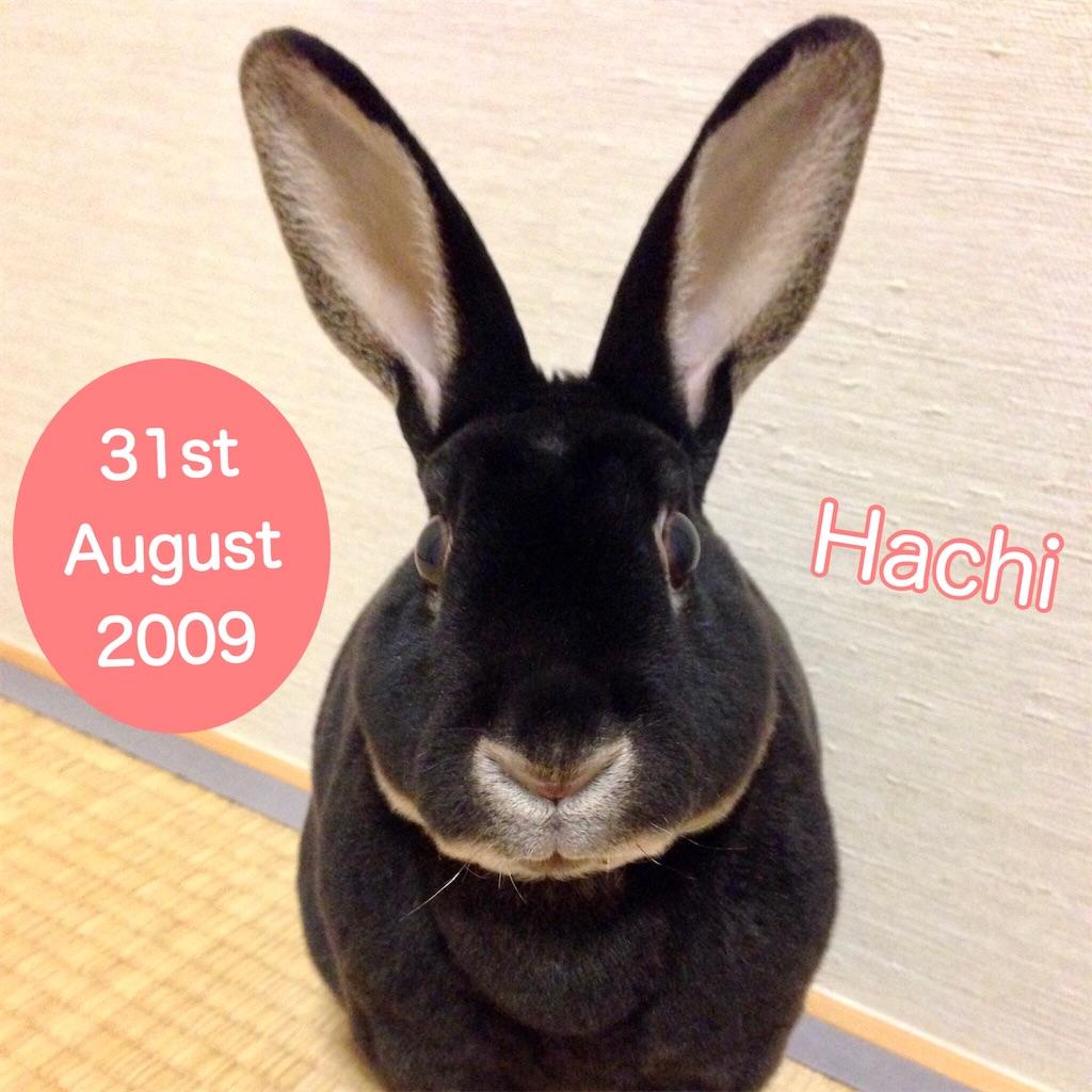 f:id:hachinohige:20201229183318j:image