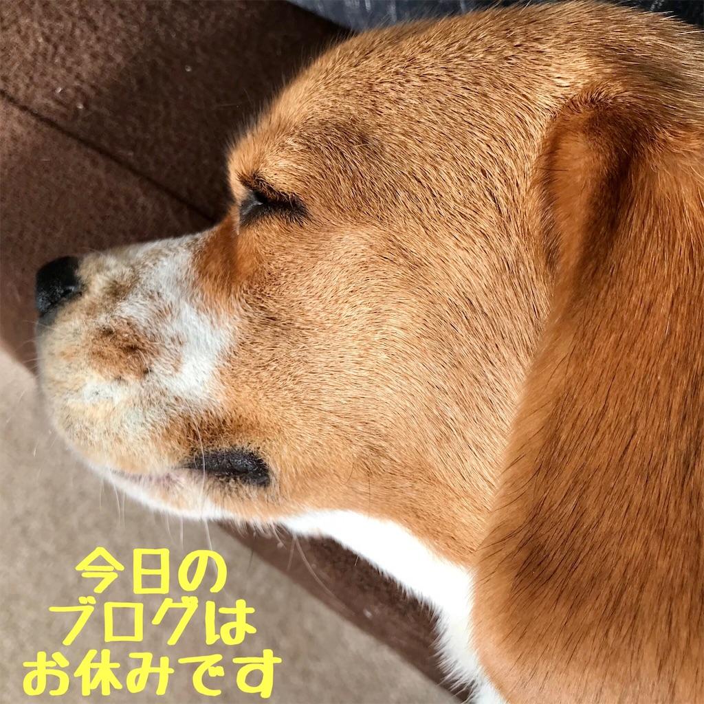 f:id:hachinohige:20210106165948j:image