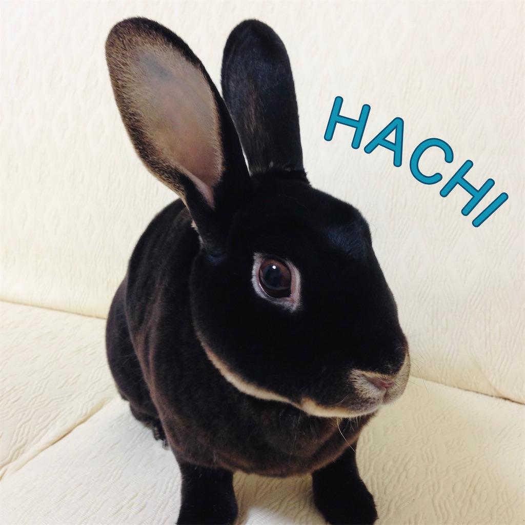 f:id:hachinohige:20210830154854j:image
