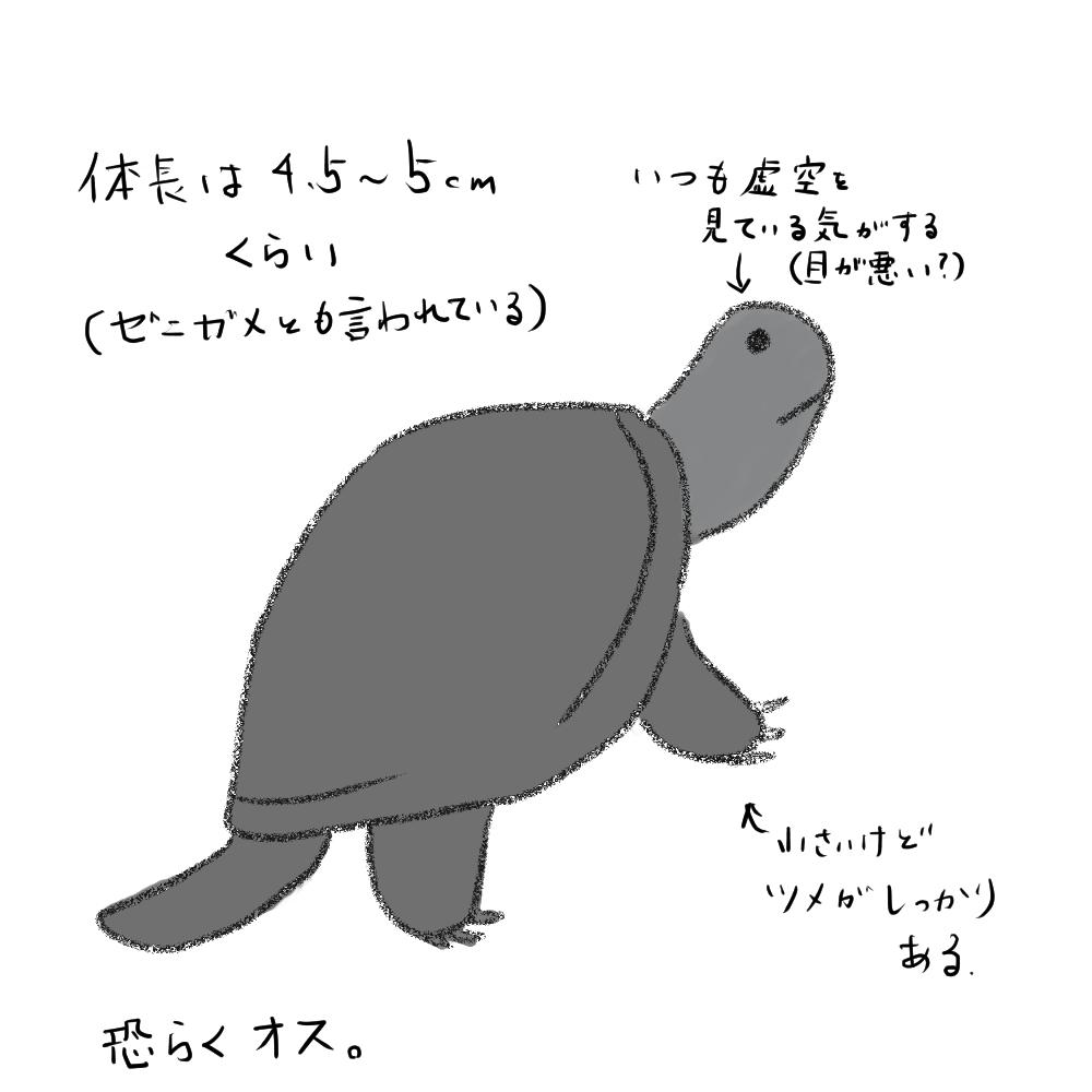 f:id:hachiroku48:20191203231529j:plain