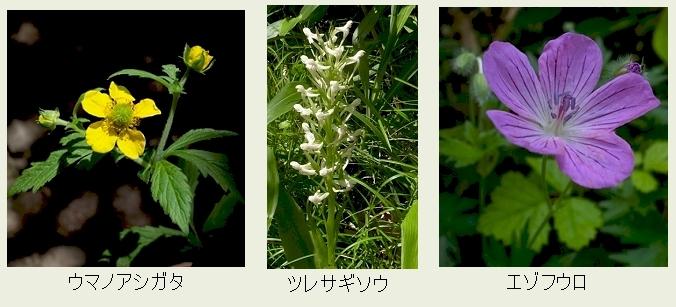 f:id:hadukinagatuki:20180530085714j:image