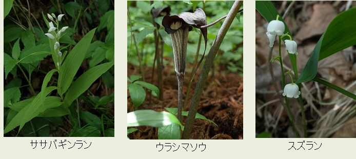 f:id:hadukinagatuki:20180530085809j:image