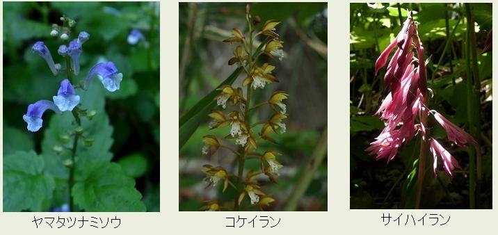 f:id:hadukinagatuki:20180530085850j:image