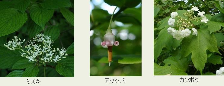 f:id:hadukinagatuki:20180530085930j:image