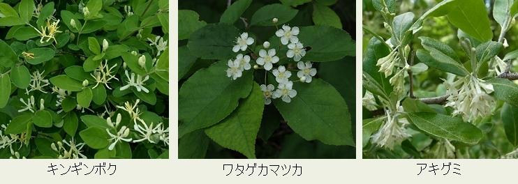 f:id:hadukinagatuki:20180610035654j:image