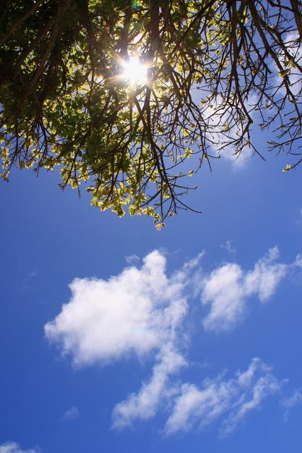 f:id:hagitani-naoko:20120410134351j:image:w300:left