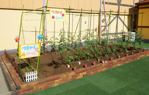 月影幼稚園の園庭で育てる野菜