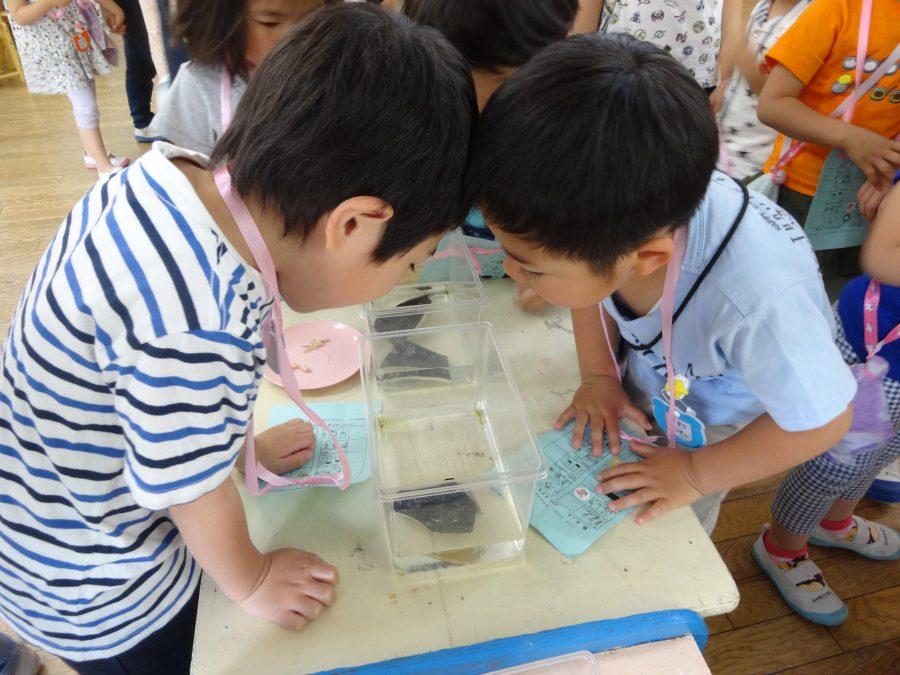 冨士見幼稚園園庭