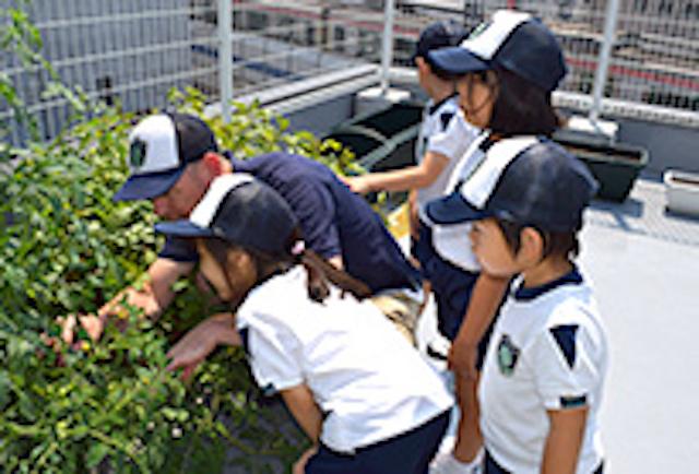 ワールドキッズキンダーガーデンで屋上にある草花を見学する子どもたち