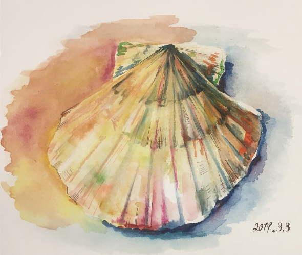 透明水彩で描いたホタテ貝