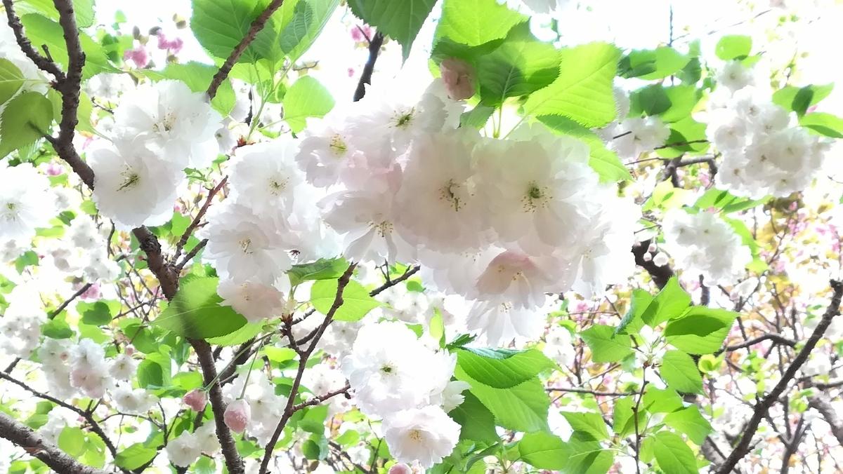 f:id:hahatonokurashijournal:20190422205049j:plain