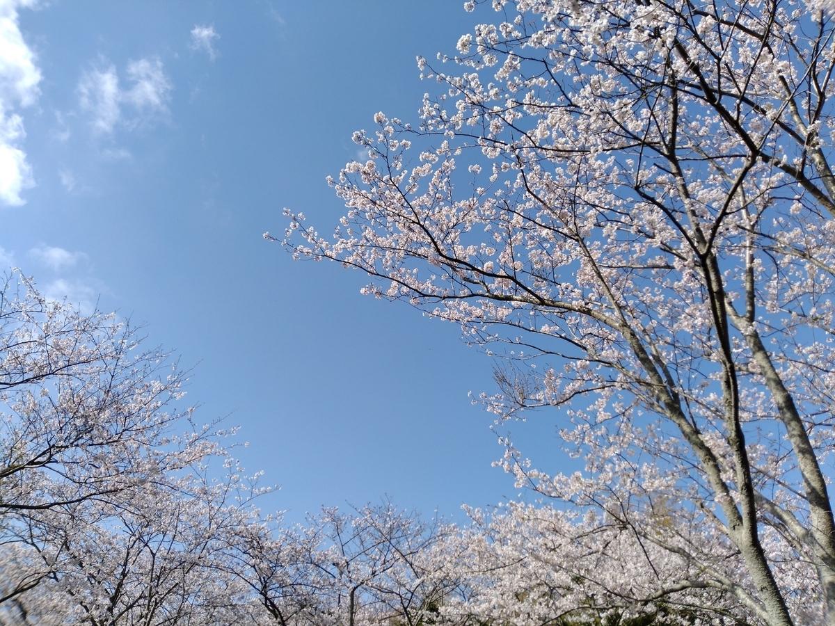 f:id:hahatonokurashijournal:20210330084635j:plain