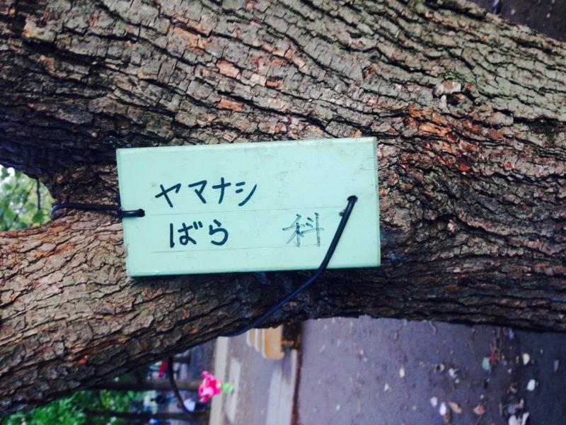 f:id:haidimama:20161102120010j:plain