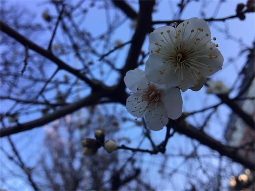 f:id:haiironobutoshi:20170111234629j:plain