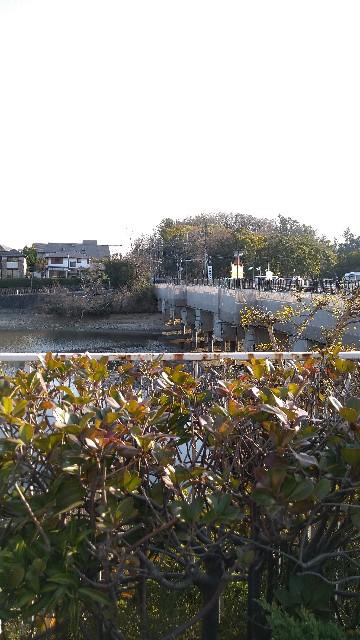 f:id:haikusumomochan:20210222064126j:image