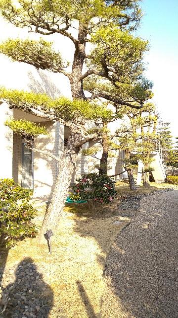 f:id:haikusumomochan:20210222064520j:image