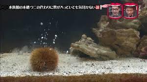f:id:haimushi:20190323070437j:plain