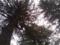 木陰で涼み中