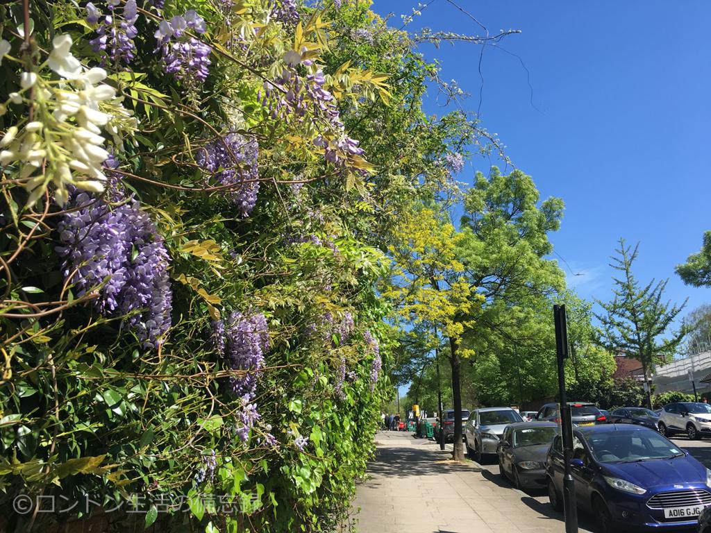spring_flowers_london