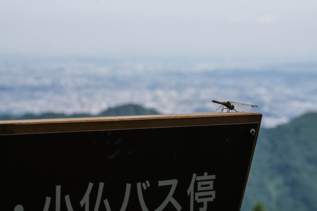 f:id:haiya_san:20170905010224j:plain