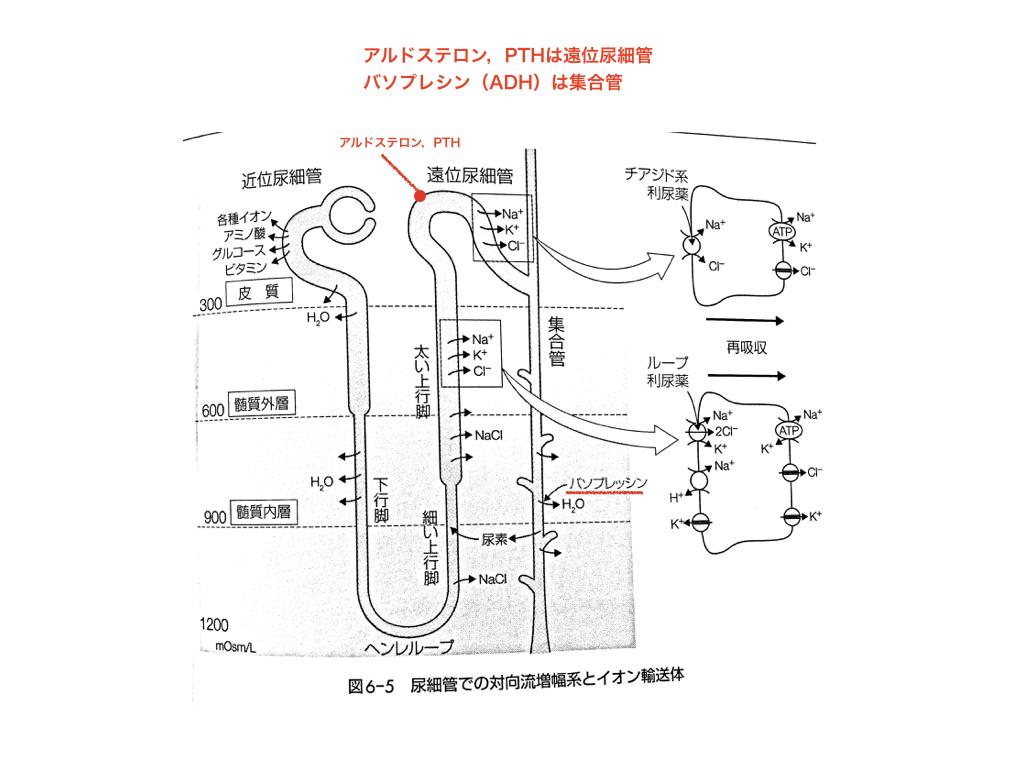 f:id:hakasenoorigami:20180514054321j:plain