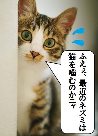 f:猫マンガ2