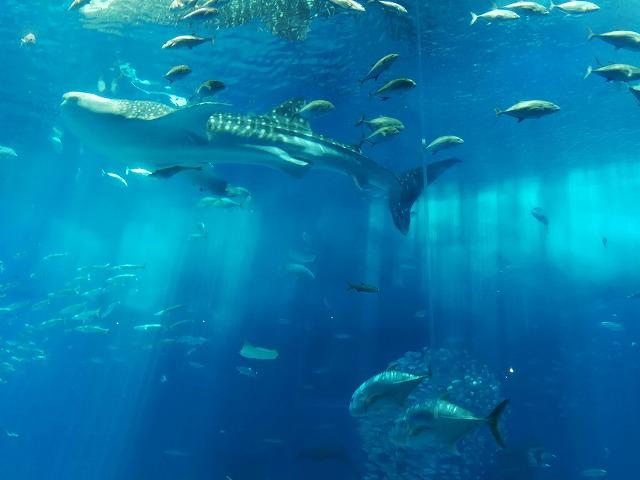 美ら海水族館の写真