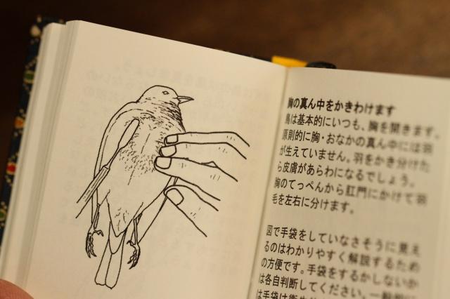 f:id:hakubutsudo:20170120151812j:plain