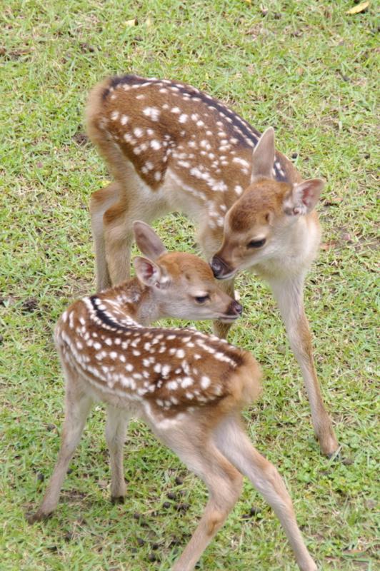 中むつまじきかな [鹿][奈良]